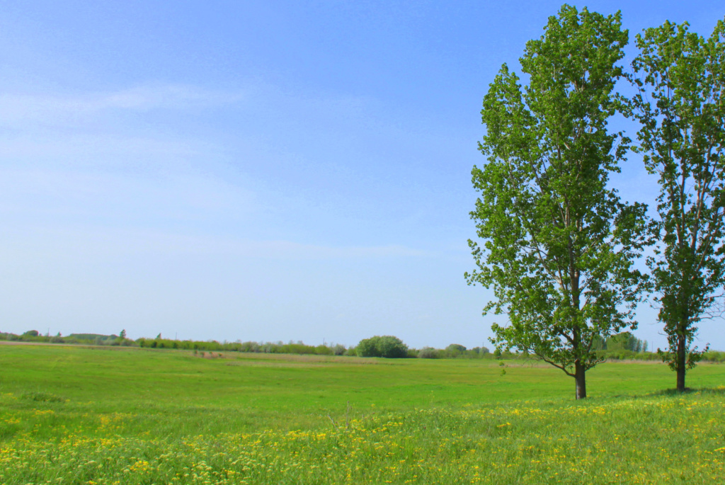 Selevenjska pusta Vojvodina