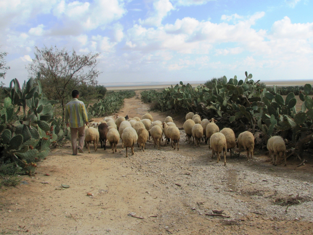 Notranjost Tunizije