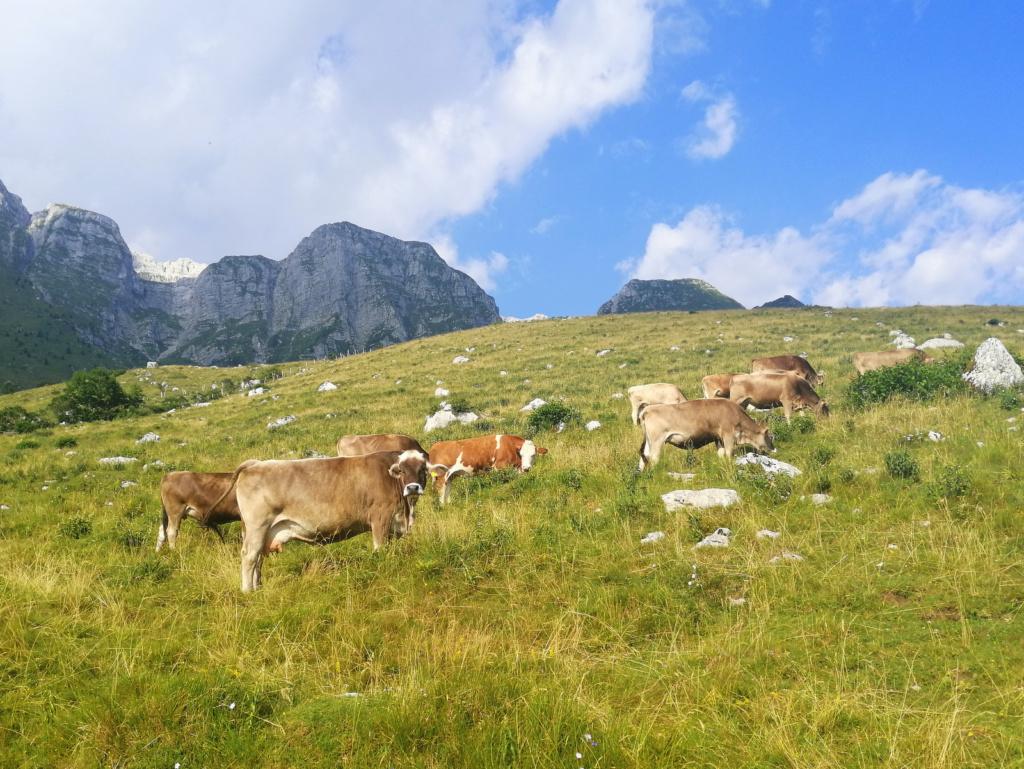 Kobariške pašne planine