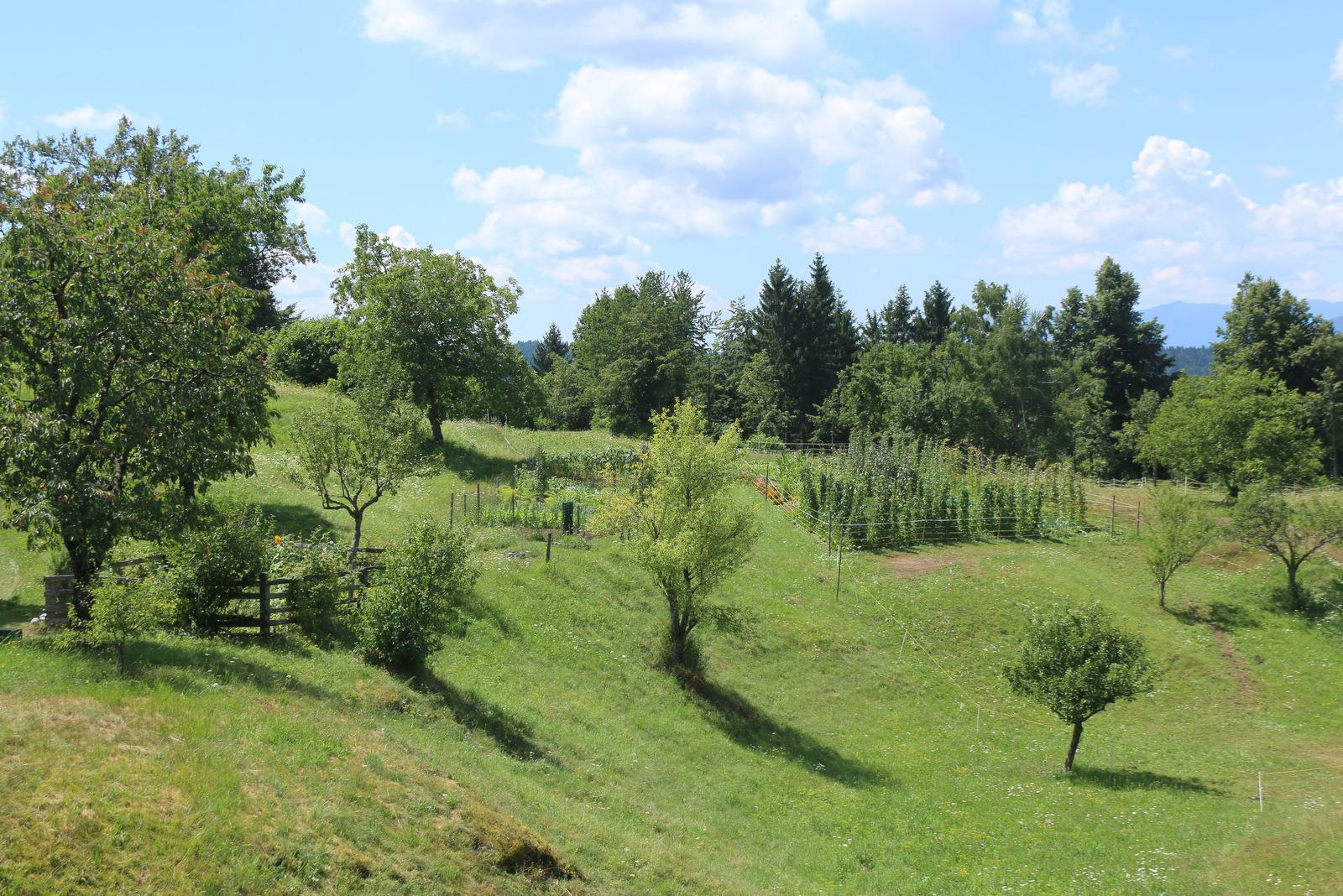 Travniki v okolici vasi Dobec