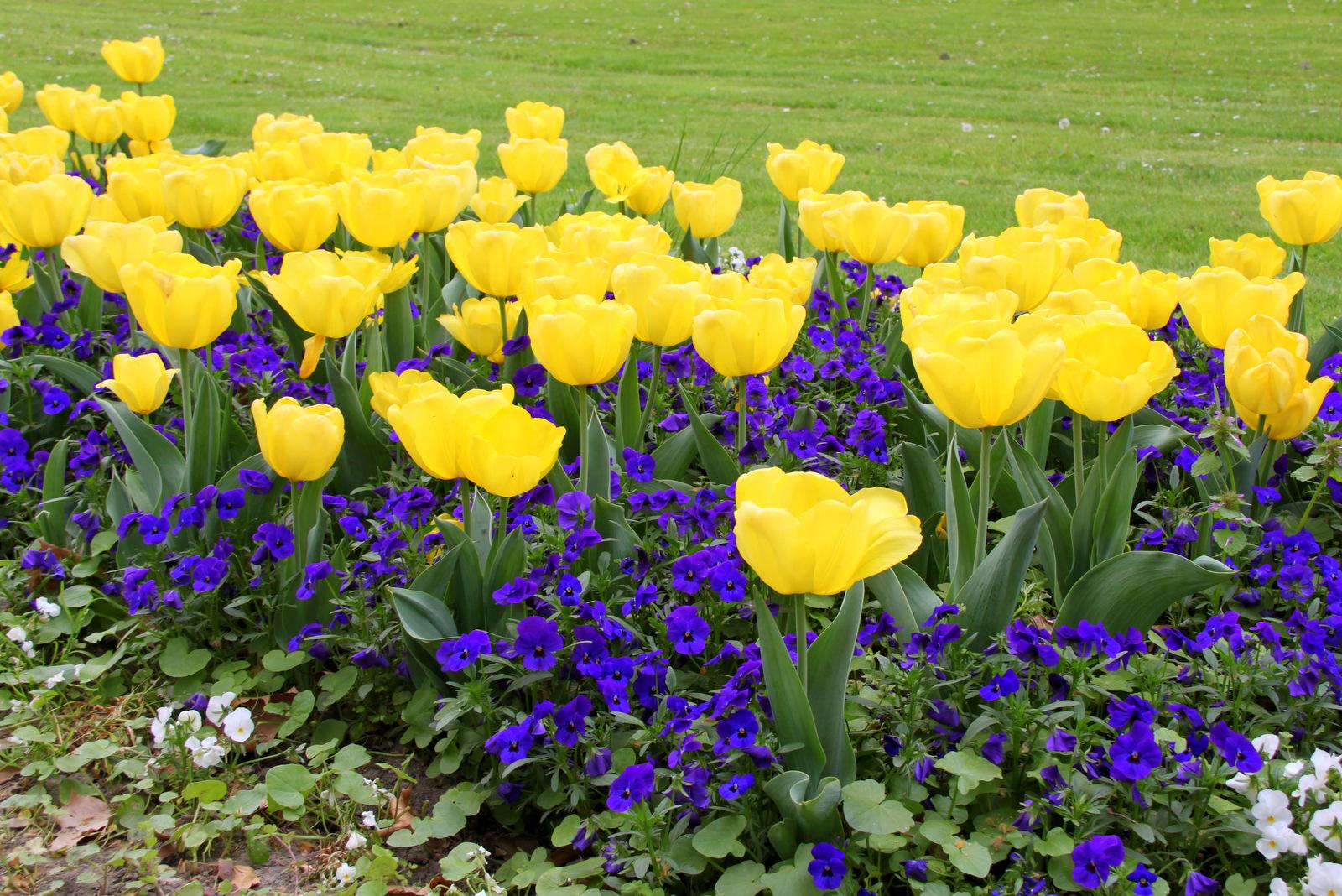 Park z nasadom cvetlic, Heviz