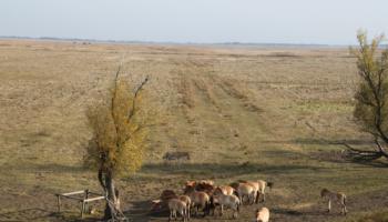 Madžarska pusta