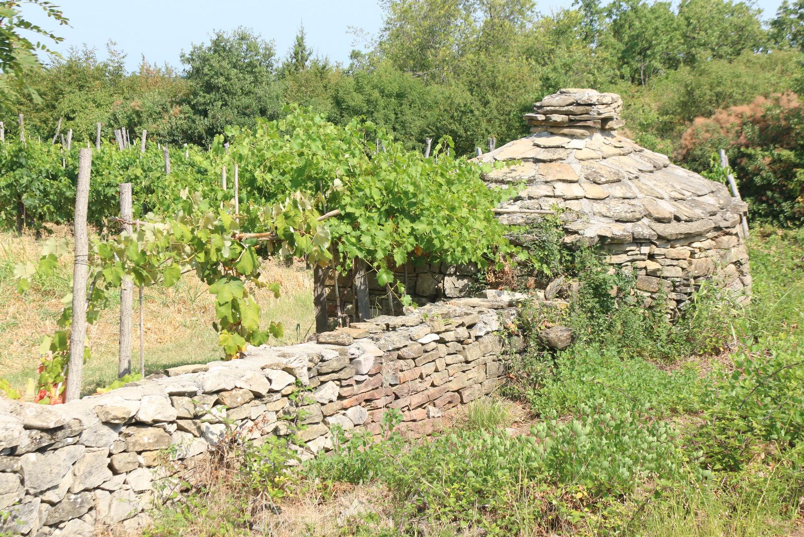 Kažun v Padni, pastirsko zatočišče iz kamna, značilno za Istro.