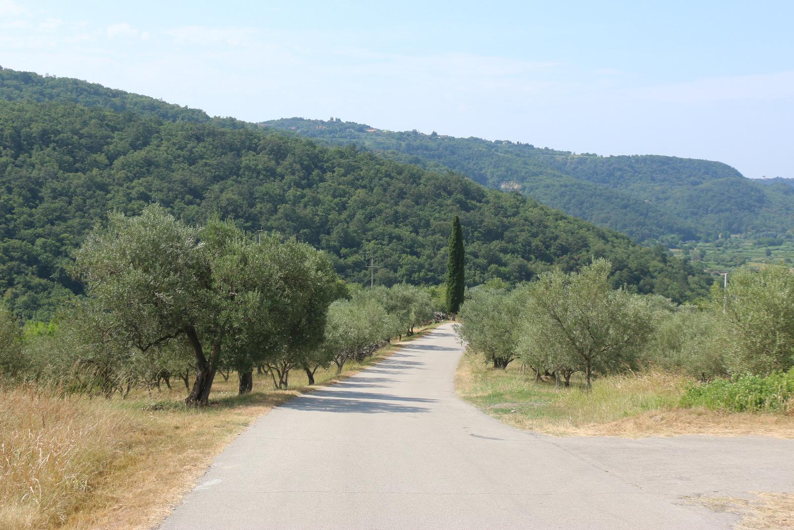 Za Padno so značilni oljčni nasadi.
