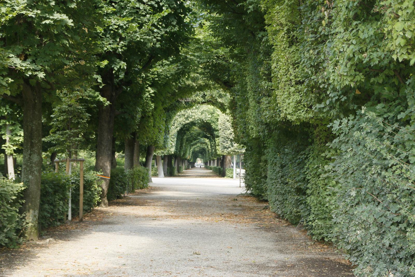 Park v Schönbrunnu
