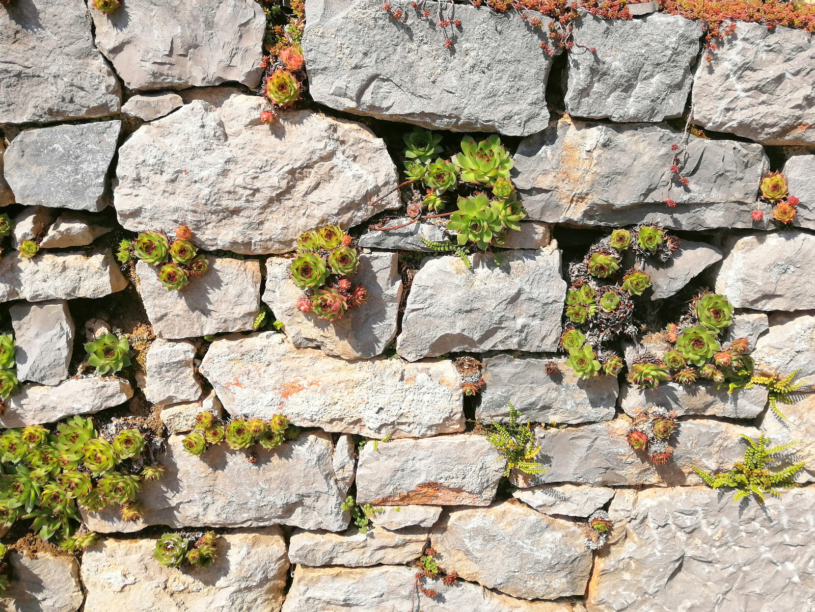 Kamen in v njem rastoče rastlinstvo