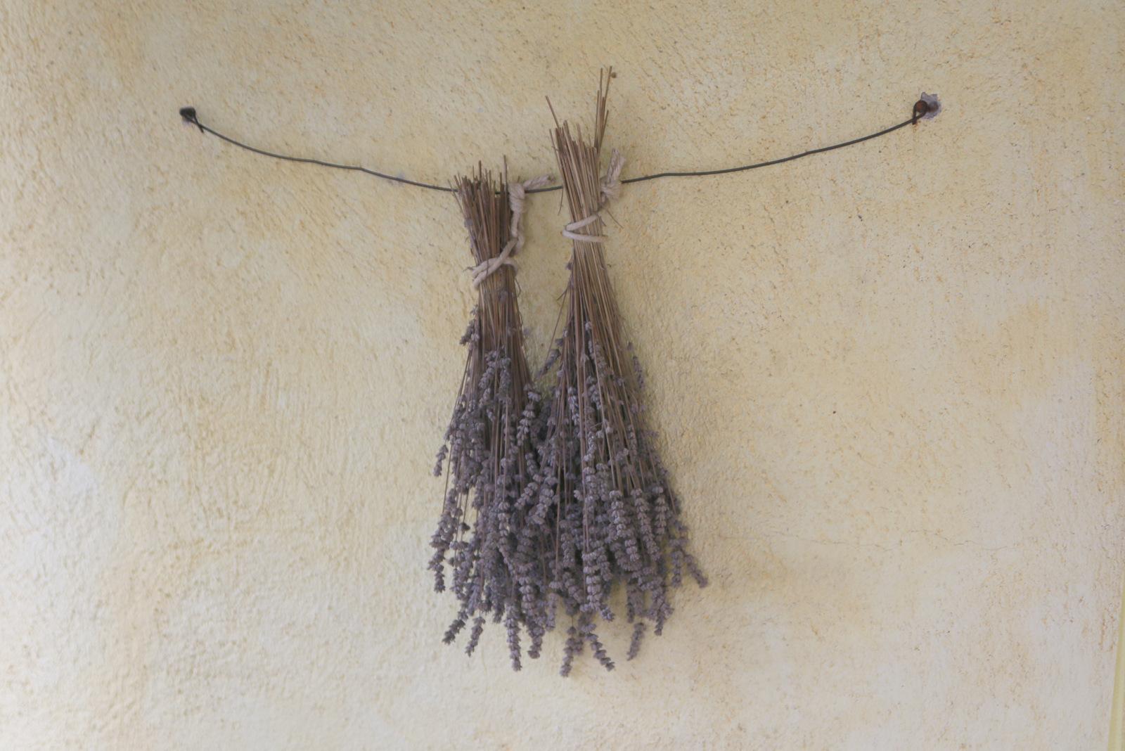 Sušenje sivke