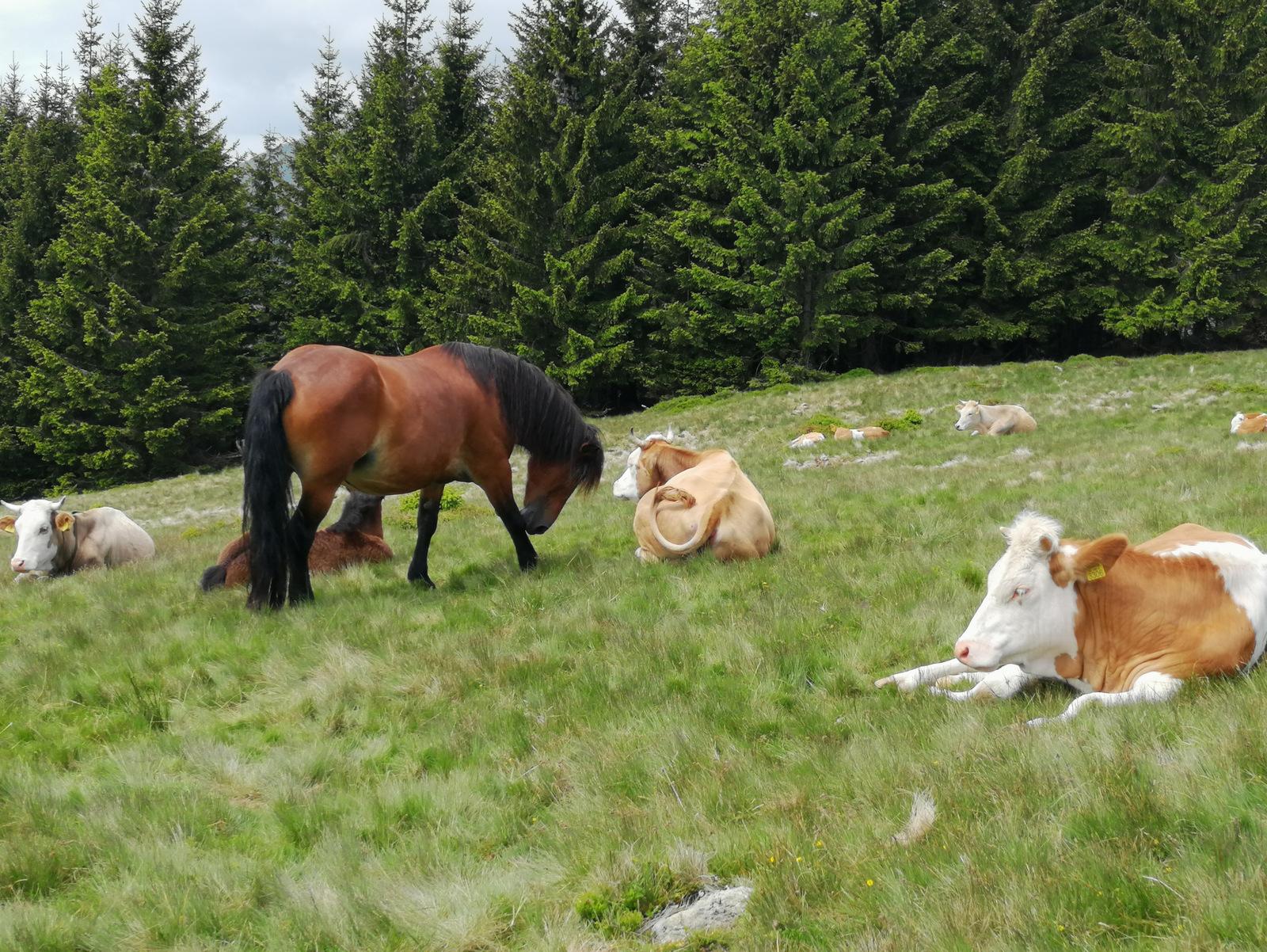 Pot do Kašne planine, živina