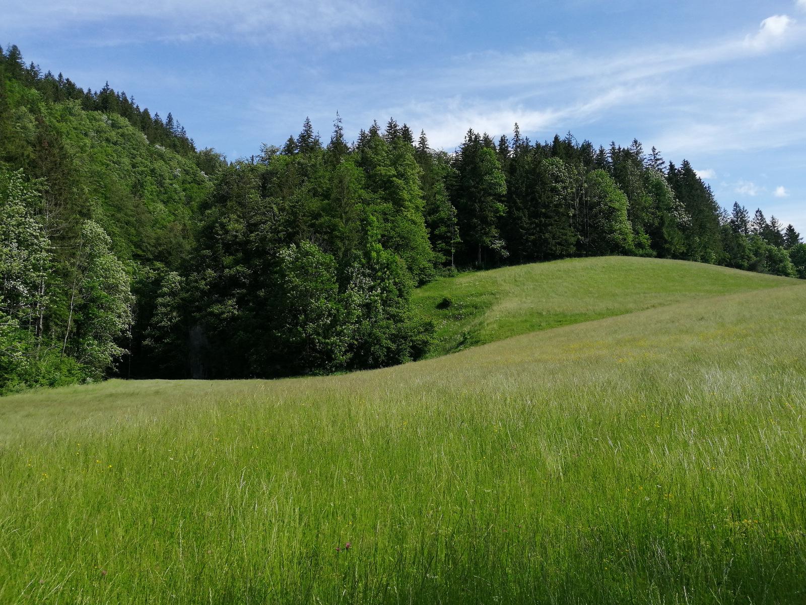 Podvolovljek, travnik