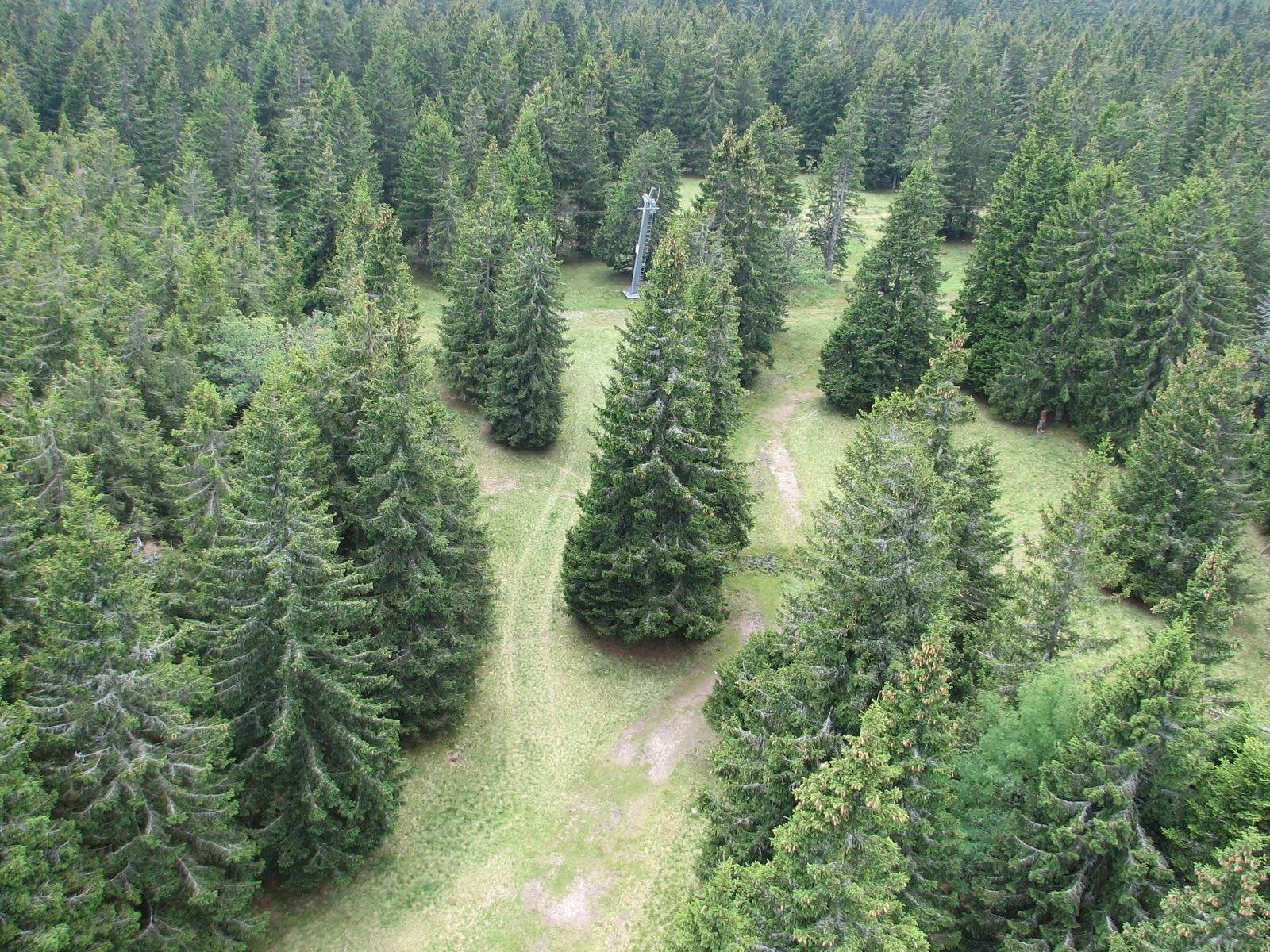 Rogla, gozdovi