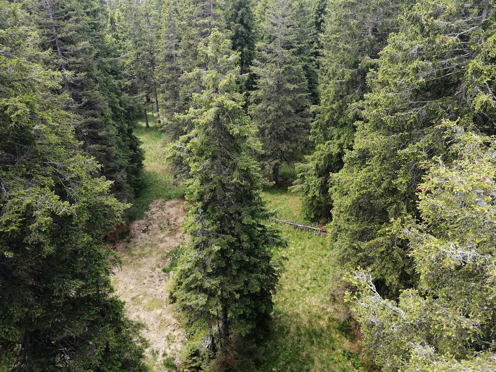 Rogla, Pot med krošnjami dreves