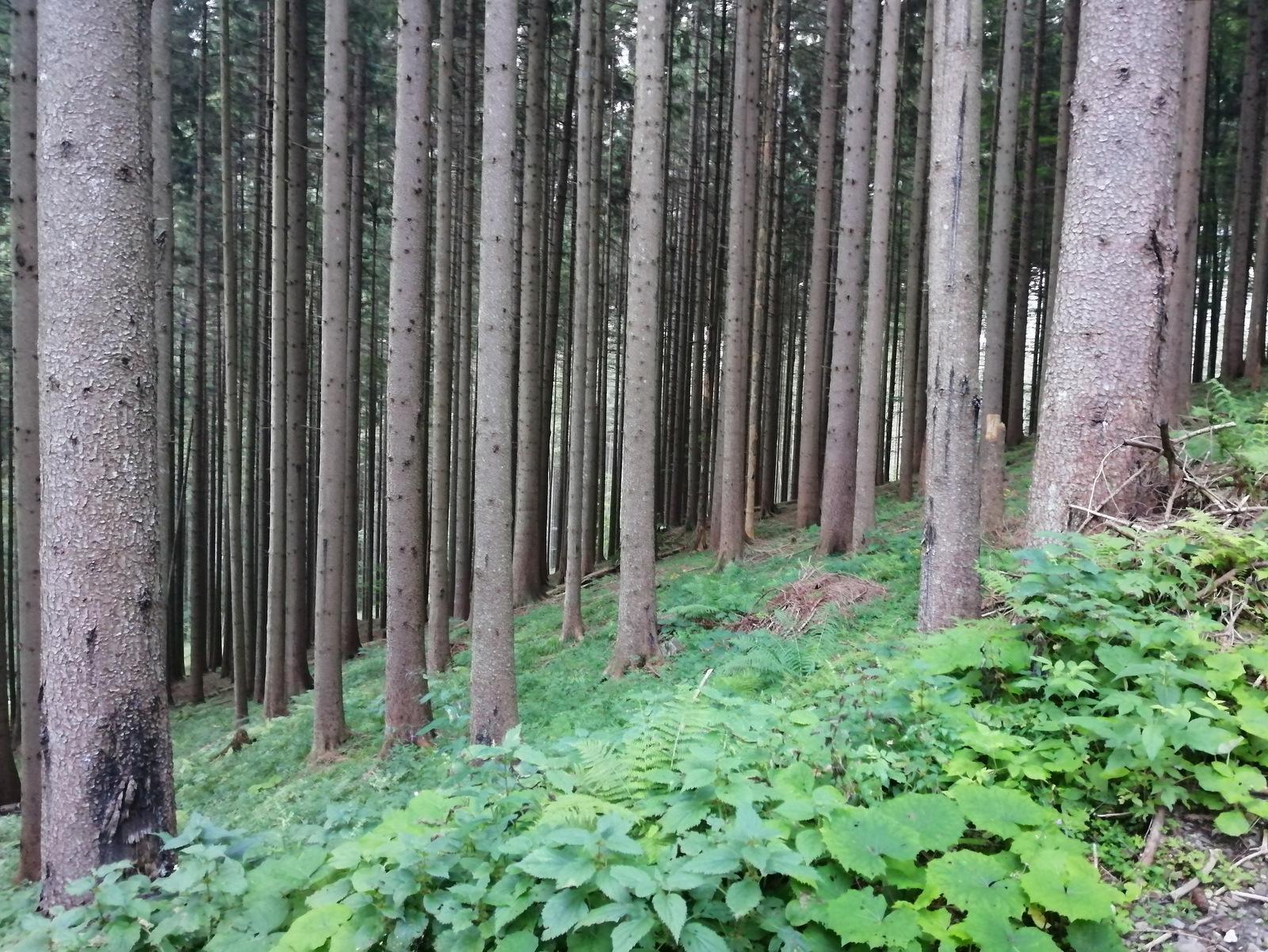 Češka koča, drevesa