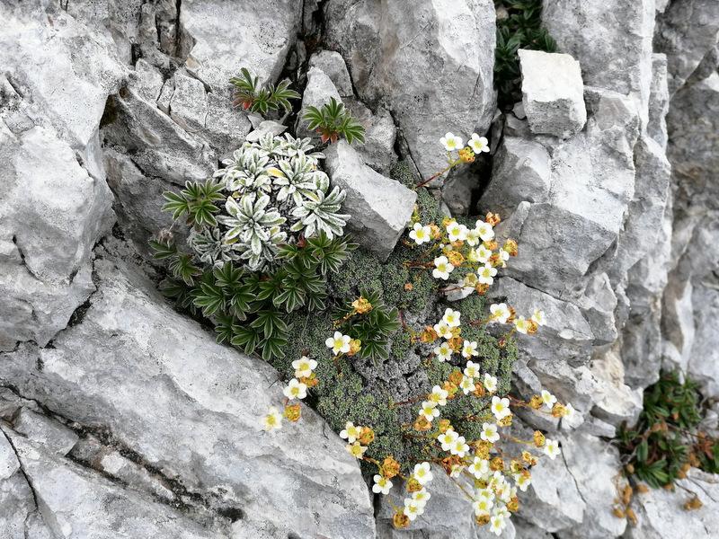 Kladivo, pot, cvetje
