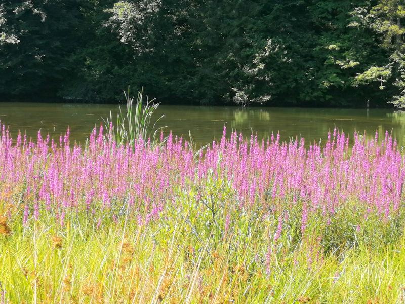 Reško jezero, cvetje