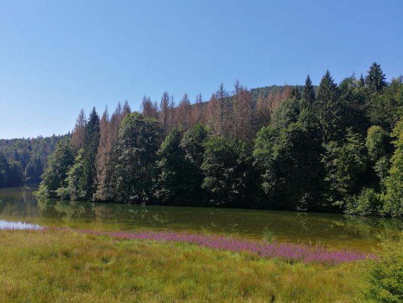 Pisano cvetje ob Reškem jezeru