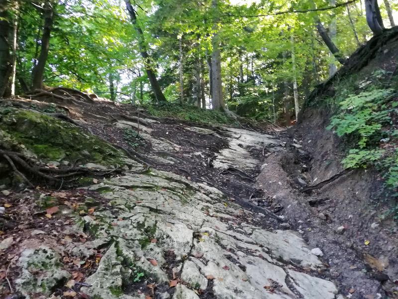 Do Skale vodi kamnita pot skozi gozd