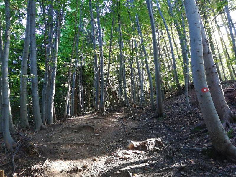 Skala, gozdna pot