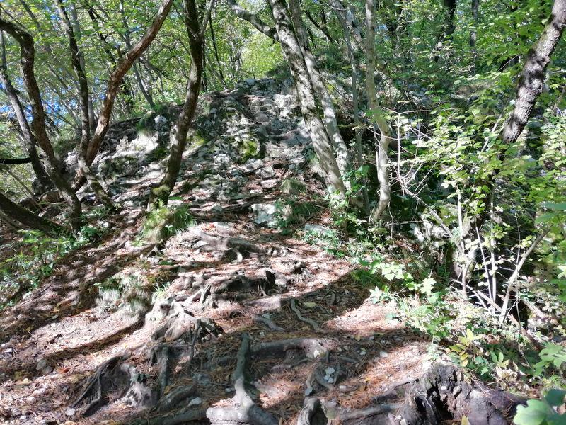 Gozdna pot po Konjiški gori