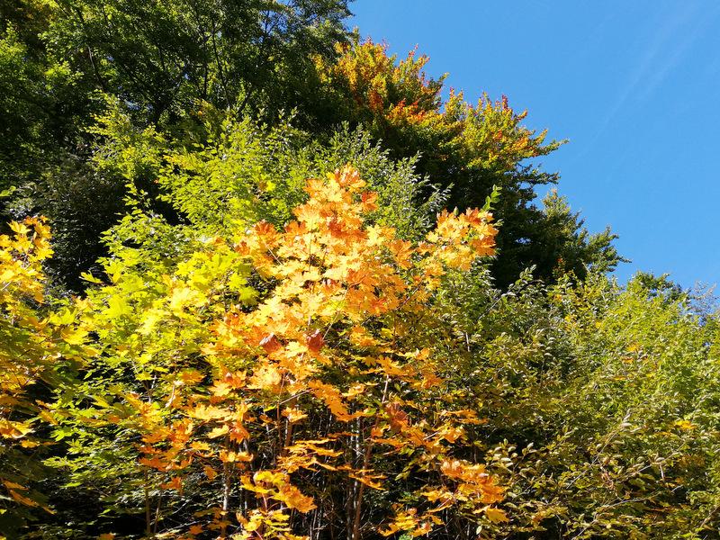 Jesenske barve listja ob poti na Stolpnik