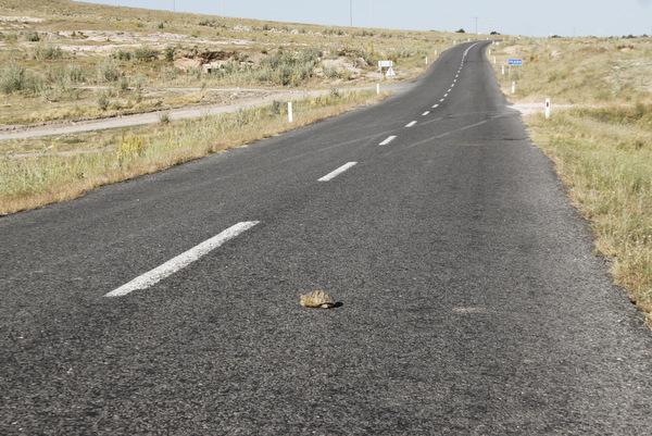 Kapadokija želva