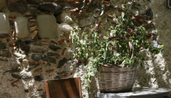 Bar Vitelli Sicilija