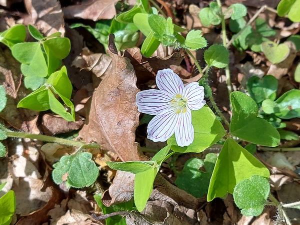 Spomladansko cvetje v Babjem ložiču